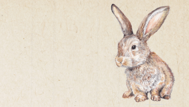 Wild Life Drawing: Easter Bunnies