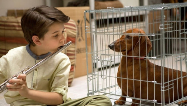 Wiener-Dog film review [STAR:4]