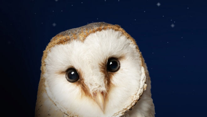 The Owl Who Was Afraid of the Dark, Unicorn Theatre
