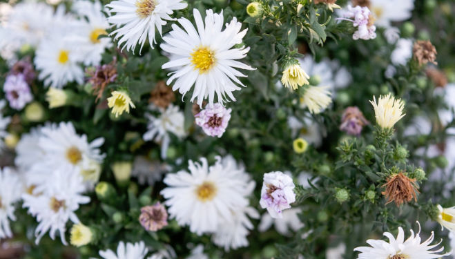 Grow Your Own Flower Patch with Georgie Newbury, Petersham Nurseries