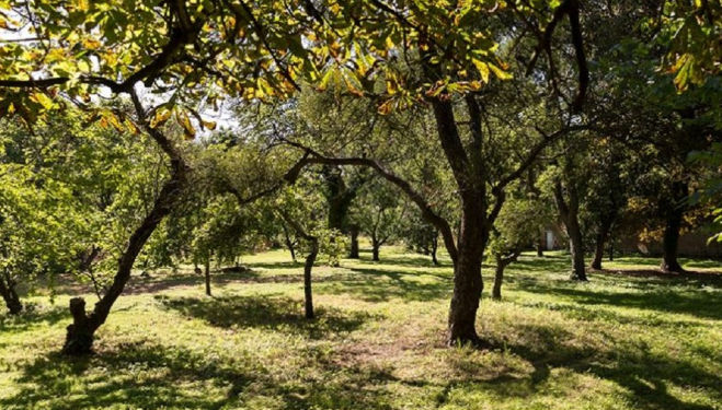 Romantic picnic spots in London: the orchard at The Theatre in the Woods