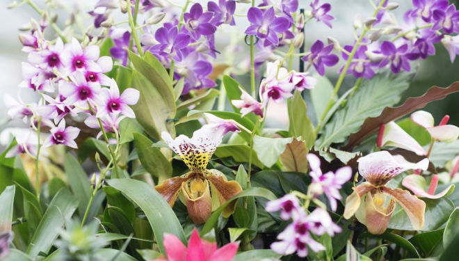 Orchids at Kew Gardens: Half Term Activities