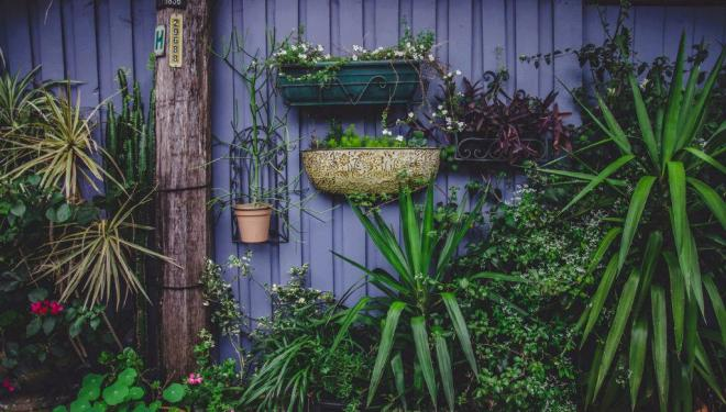 A practical guide to urban gardening