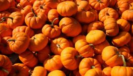 Best pumpkin patches near London