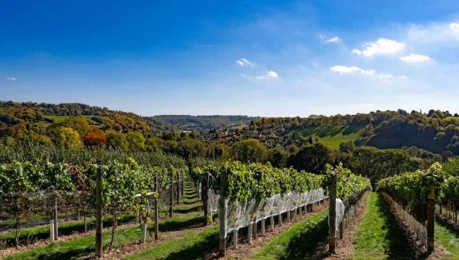 Award-winning vineyards to tour this summer