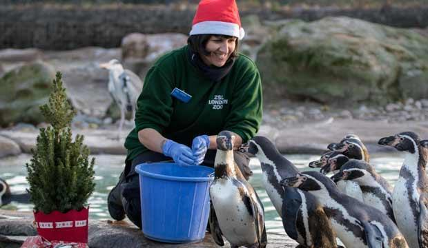 Christmas at ZSL London Zoo