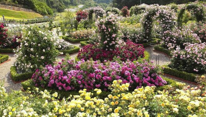 Bring the joys of a rose garden into your home