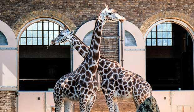 London zoos and wildlife sanctuaries are reopening...