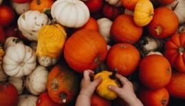 The kids will love a trip to the pumpkin patch. Photo: Brittney Dowell/Unsplash