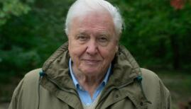 David Attenborough in A Life on Our Planet, Netflix. Photo: Netflix