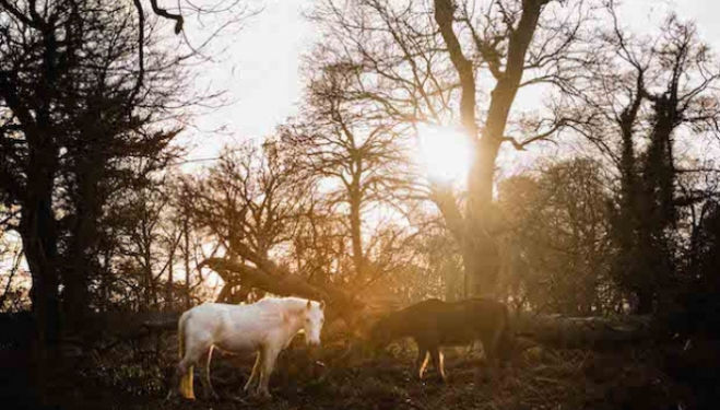 Destination of the Week: New Forest