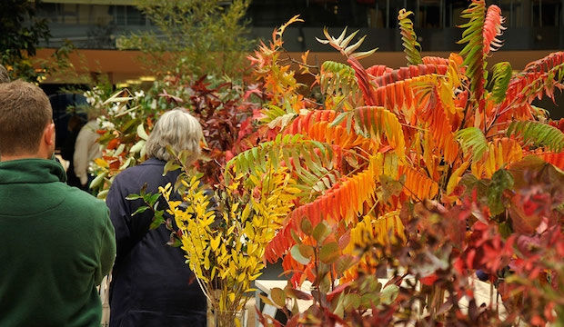 RHS London Shades of Autumn Show 2015