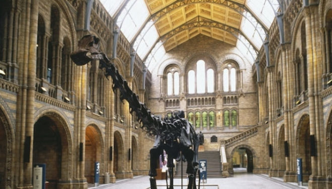 The museum's famous Diplodocus skeleton cast