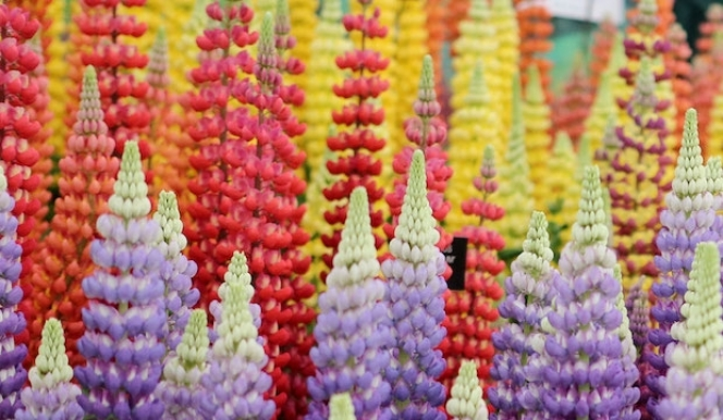 London's blooming: Chelsea Flower show