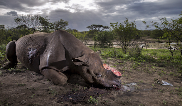 Memorial to a species, Brent Stirton, South Africa