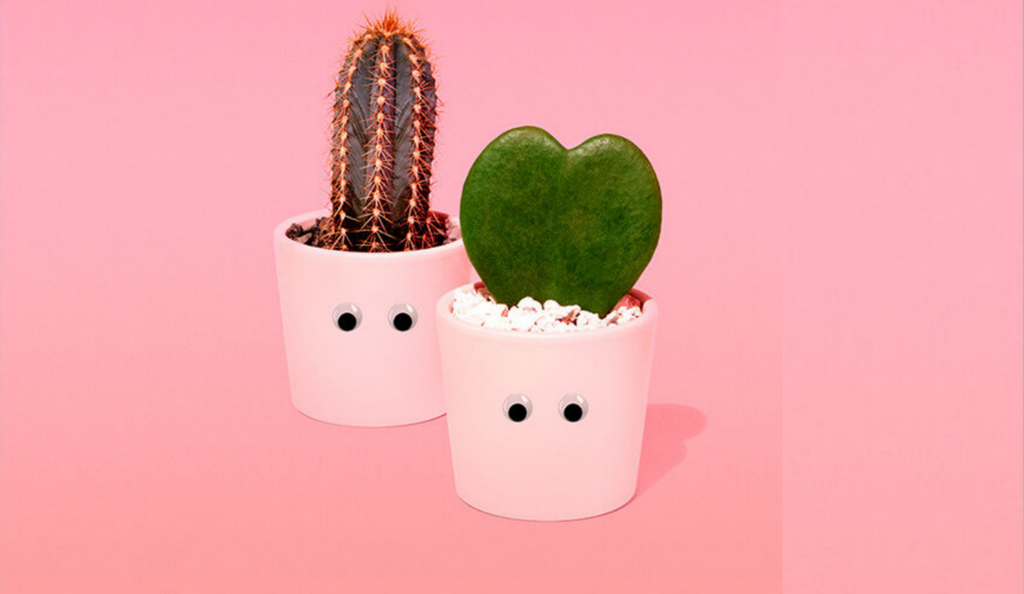 Quirky spikes: Barry the cactus