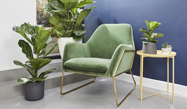 The Green-fingered one: Swoon and Patch present The Green House