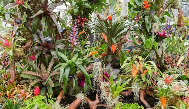 RHS Chelsea Flower Show 2019: booking now open