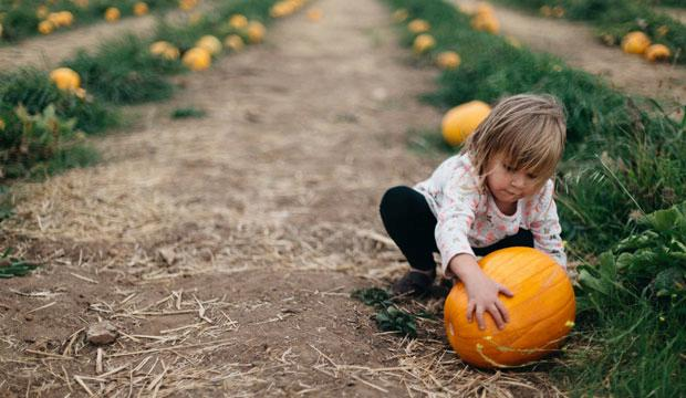 Best pumpkin patch for pumpkin lovers: Secretts