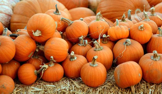 Best pumpkin patch for wheelbarrow fun: Stanhill Farm