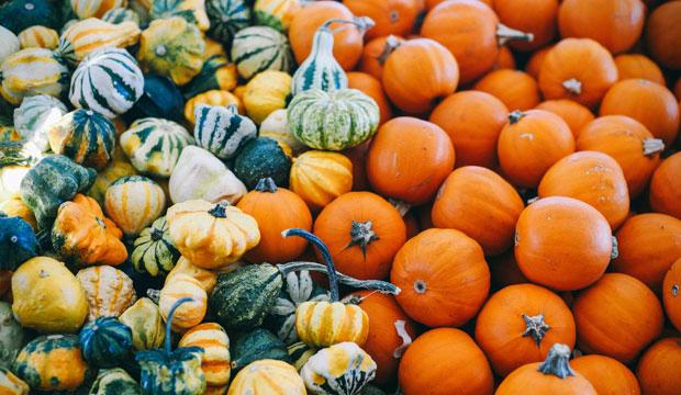 Best pumpkin patch for little ones: Crockford Bridge Farm