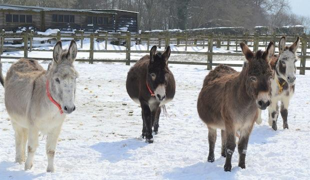 The charities providing for four-legged friends: The Donkey Sanctuary & RSPCA