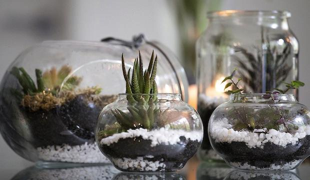 Appreciate nature more: London Terrariums' Workshop