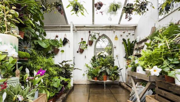Garden Centre: Best Garden Centres In London