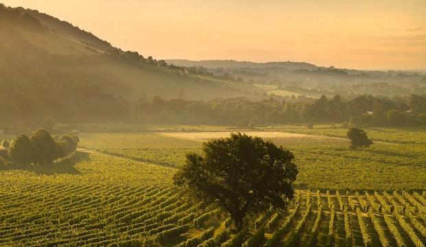 Vineyards of the Surrey Hills, Surrey