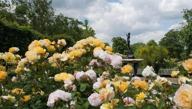 The Rose Garden, Hyde Park