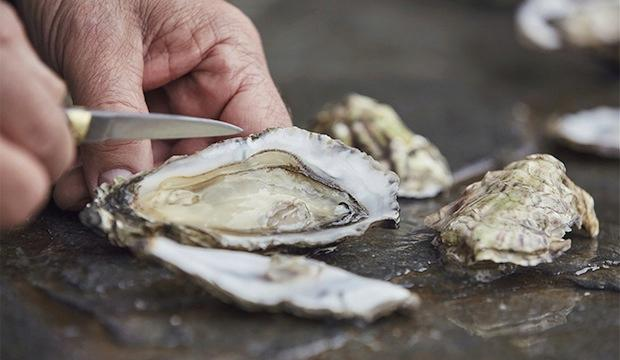 Shuck oysters like a pro at Wright Brothers