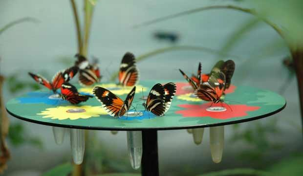 Have a Very Hungry Caterpillar experience at ZSL London Zoo