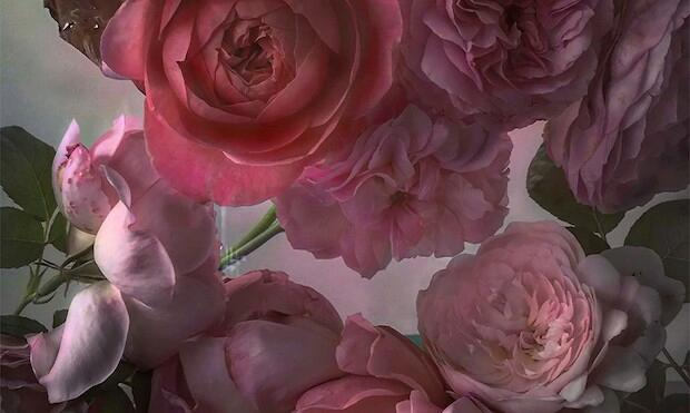 Nick Knight: Roses from my Garden, Waddesdon Manor