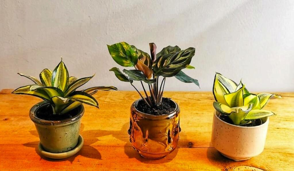 Box and Sprout: houseplants delivered to your door