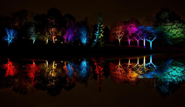 Winter activities for families: Syon Park's Enchanted Woodland